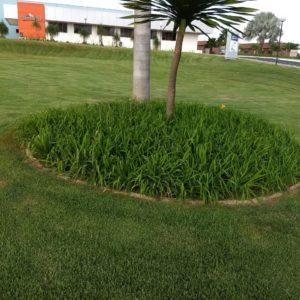 hugol-verdflora014CC3F05B0-1450-4649-7E25-95552FC62ED1.jpg